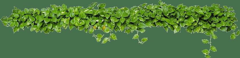 jardinería sostenible