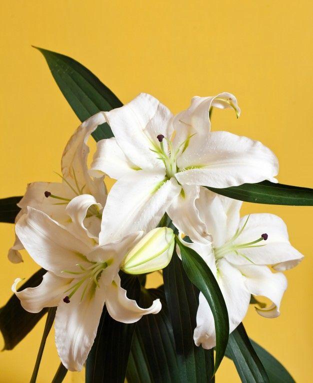 flores_amorosas