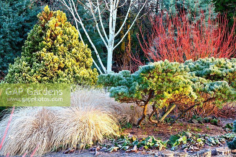 jardin_de_invierno