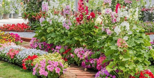 Trucos para tu bello jardín
