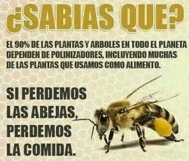 Berberomeloe_relación abejas