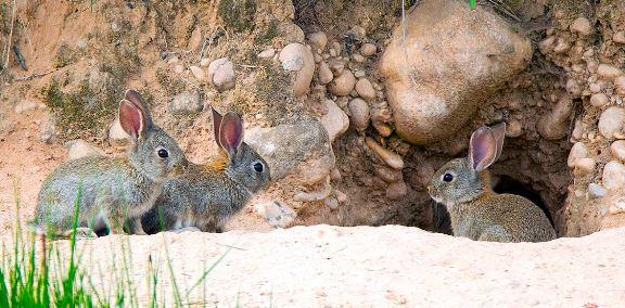 Conejo mascota ecoamigable