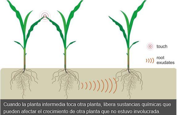 Estrés de las plantas