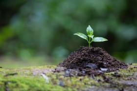 Plantas para la eternidad