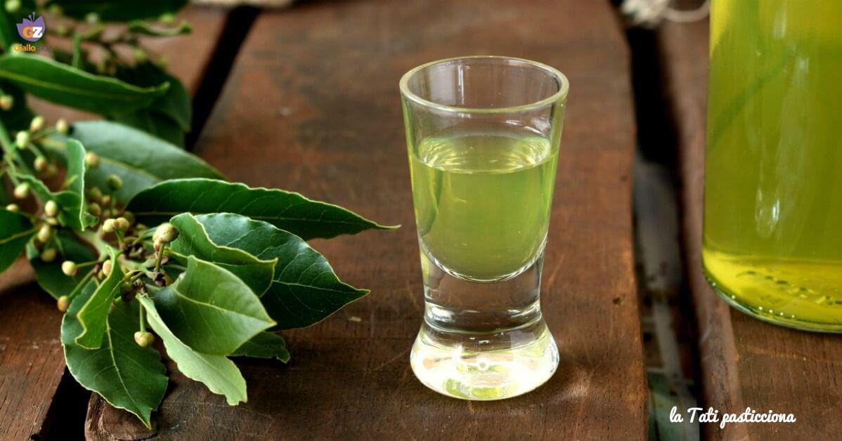 licor laurino, laurel, laurus nobilis