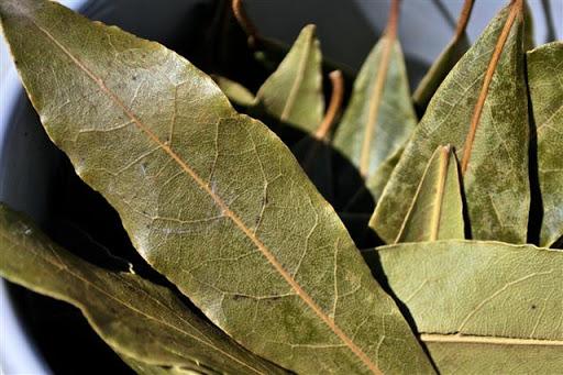 hojas de laurel, laurus nobilis