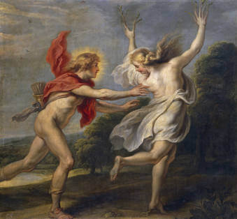 laurel, laurus nobilis. Apolo acosando a Daphne